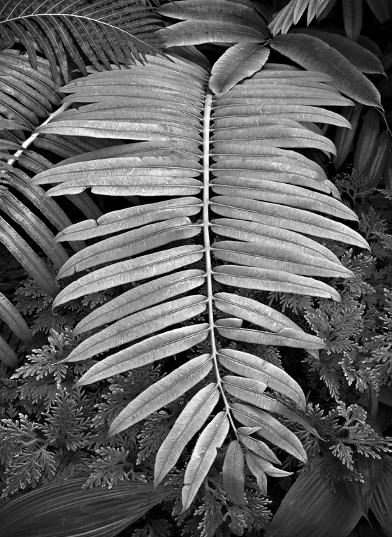 FairchildGardens01